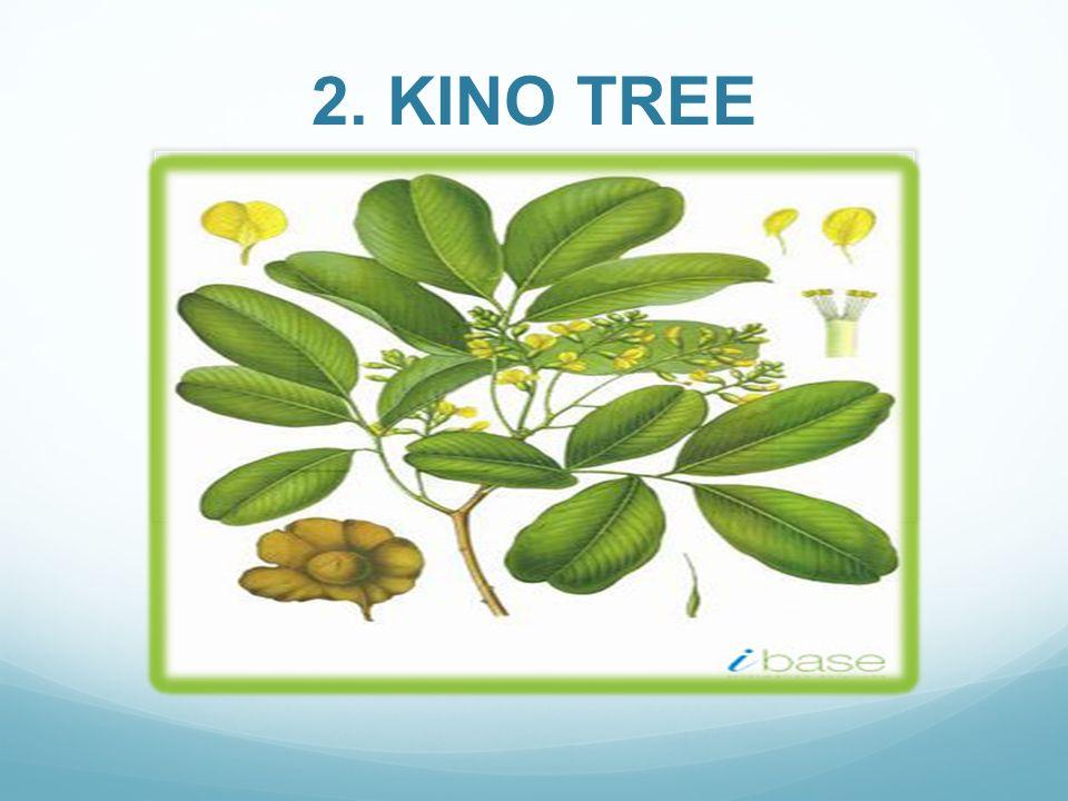 Perfil; Las hojas del árbol Kino Tree, contienen características de energía, curativa y medicinales, además de ser tónicas y afrodisíacas.