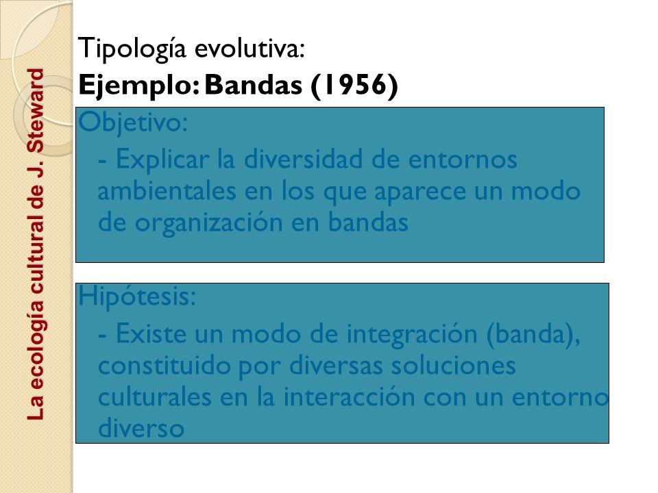 La ecología cultural de J. Steward Tipología evolutiva: Ejemplo: Bandas (1956) Objetivo: - Explicar la diversidad de entornos ambientales en los que a