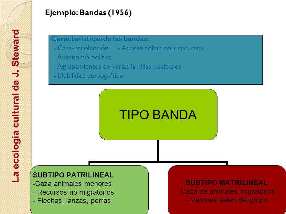 La ecología cultural de J. Steward Ejemplo: Bandas (1956) Características de las bandas: - Caza-recolección - Acceso colectivo a recursos - Autonomía