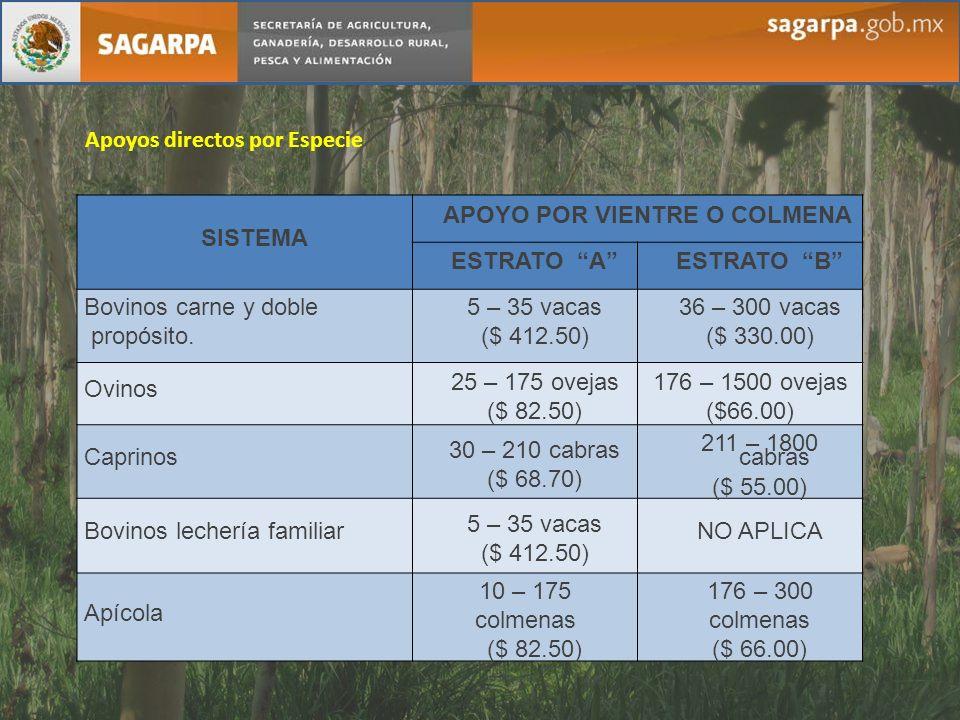 SISTEMA APOYO POR VIENTRE O COLMENA ESTRATO AESTRATO B Bovinos carne y doble propósito. 5 – 35 vacas ($ 412.50) 36 – 300 vacas ($ 330.00) Ovinos 25 –