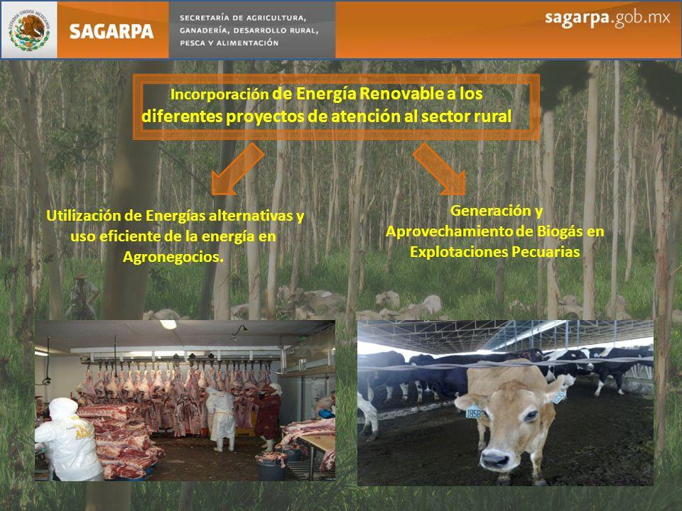 Incorporación de Energía Renovable a los diferentes proyectos de atención al sector rural Utilización de Energías alternativas y uso eficiente de la e