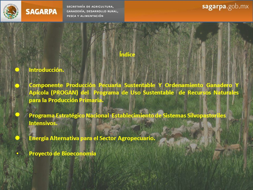 Índice Introducción. Componente Producción Pecuaria Sustentable Y Ordenamiento Ganadero Y Apícola (PROGAN) del Programa de Uso Sustentable de Recursos