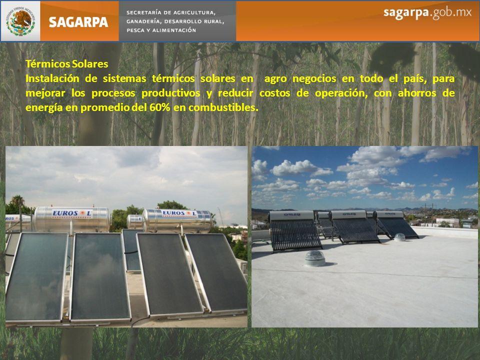 Térmicos Solares Instalación de sistemas térmicos solares en agro negocios en todo el país, para mejorar los procesos productivos y reducir costos de