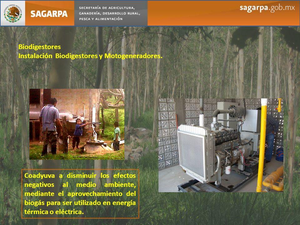 Biodigestores Instalación Biodigestores y Motogeneradores. Coadyuva a disminuir los efectos negativos al medio ambiente, mediante el aprovechamiento d