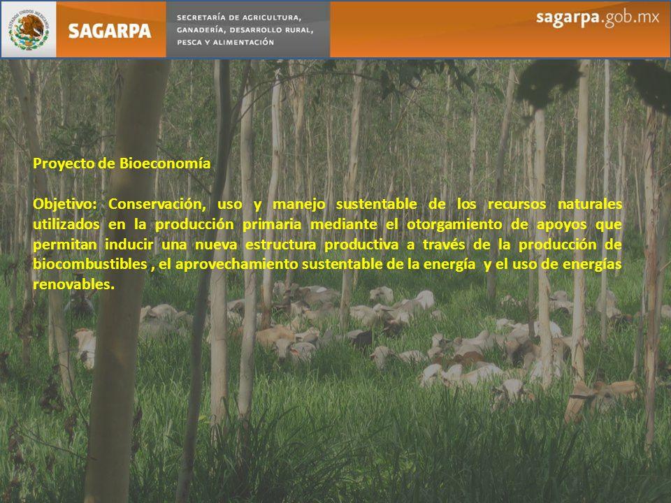 Proyecto de Bioeconomía Objetivo: Conservación, uso y manejo sustentable de los recursos naturales utilizados en la producción primaria mediante el ot