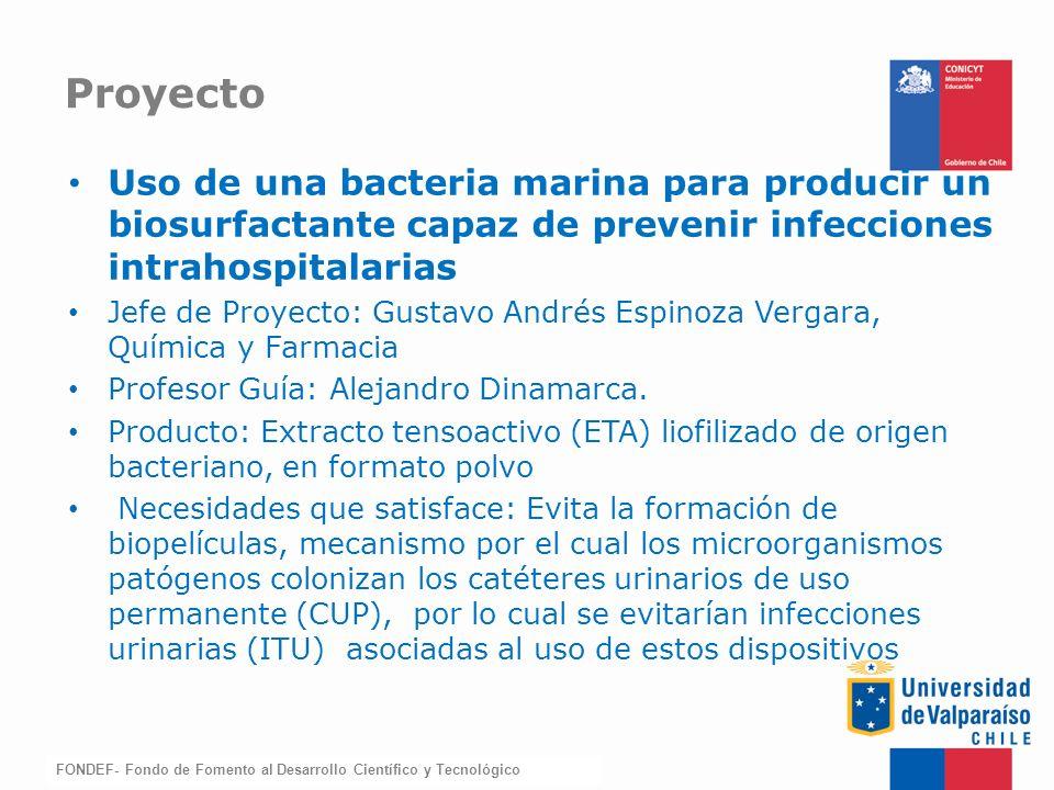 FONDEF-Fondo de Fomento Uso de una bacteria marina para producir un biosurfactante capaz de prevenir infecciones intrahospitalarias Jefe de Proyecto: