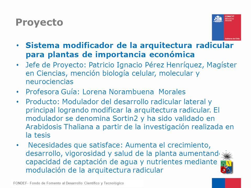 FONDEF-Fondo de Fomento Sistema modificador de la arquitectura radicular para plantas de importancia económica Jefe de Proyecto: Patricio Ignacio Pére