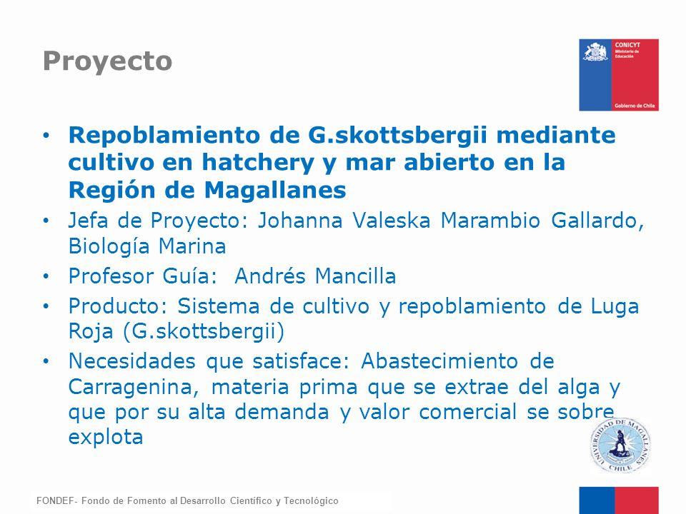 FONDEF-Fondo de Fomento Repoblamiento de G.skottsbergii mediante cultivo en hatchery y mar abierto en la Región de Magallanes Jefa de Proyecto: Johann