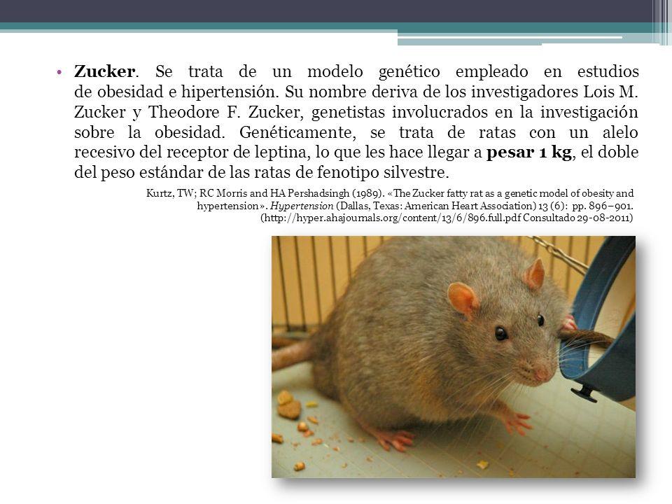 Zucker. Se trata de un modelo genético empleado en estudios de obesidad e hipertensión. Su nombre deriva de los investigadores Lois M. Zucker y Theodo
