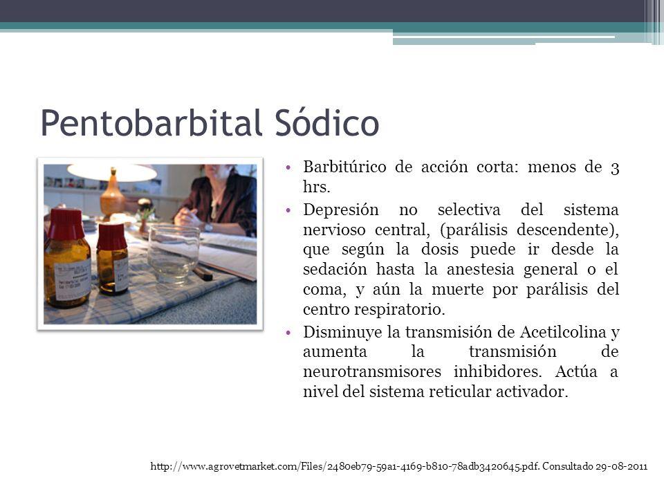 Pentobarbital Sódico Barbitúrico de acción corta: menos de 3 hrs. Depresión no selectiva del sistema nervioso central, (parálisis descendente), que se