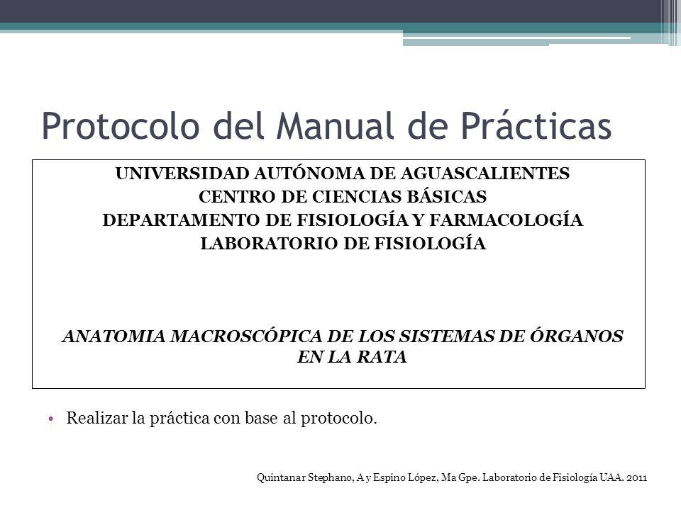 Protocolo del Manual de Prácticas UNIVERSIDAD AUTÓNOMA DE AGUASCALIENTES CENTRO DE CIENCIAS BÁSICAS DEPARTAMENTO DE FISIOLOGÍA Y FARMACOLOGÍA LABORATORIO DE FISIOLOGÍA ANATOMIA MACROSCÓPICA DE LOS SISTEMAS DE ÓRGANOS EN LA RATA Realizar la práctica con base al protocolo.