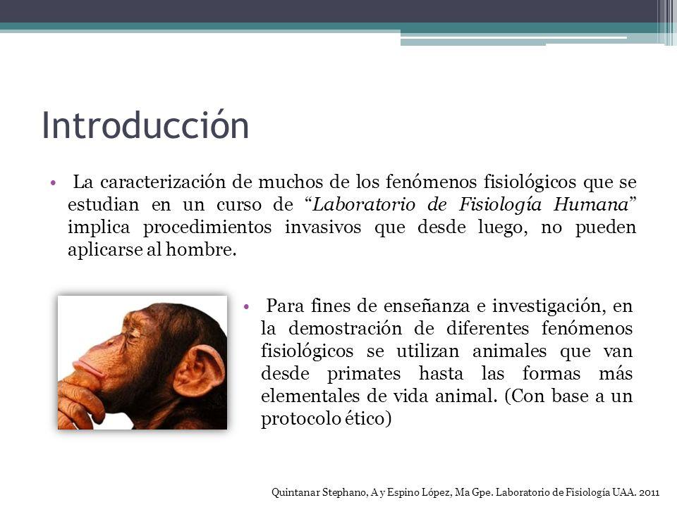 Introducción La caracterización de muchos de los fenómenos fisiológicos que se estudian en un curso de Laboratorio de Fisiología Humana implica procedimientos invasivos que desde luego, no pueden aplicarse al hombre.