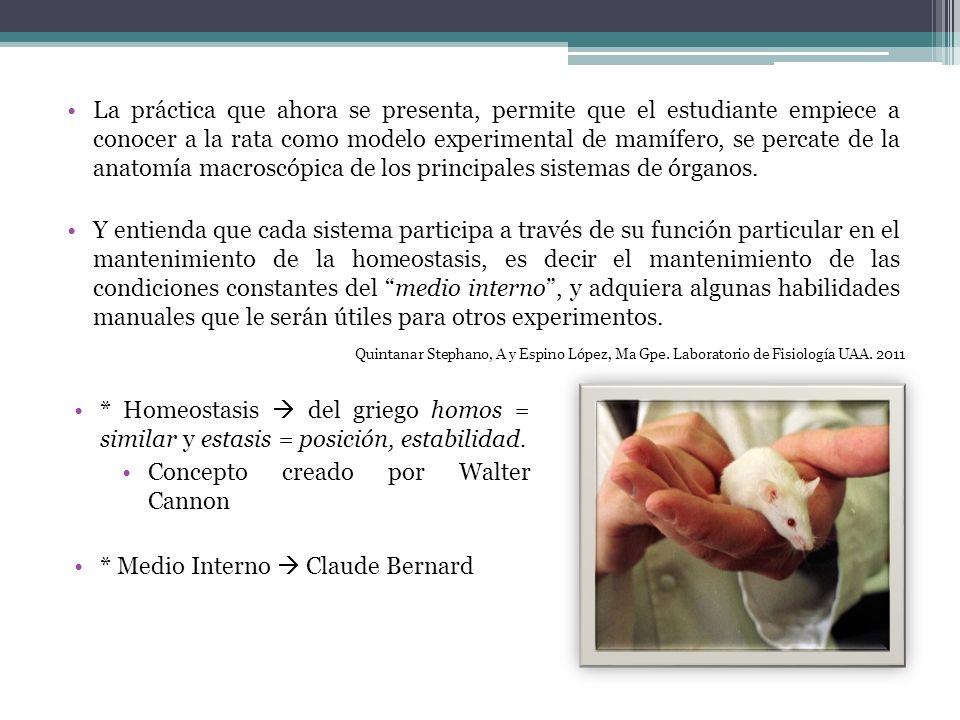 La práctica que ahora se presenta, permite que el estudiante empiece a conocer a la rata como modelo experimental de mamífero, se percate de la anatom