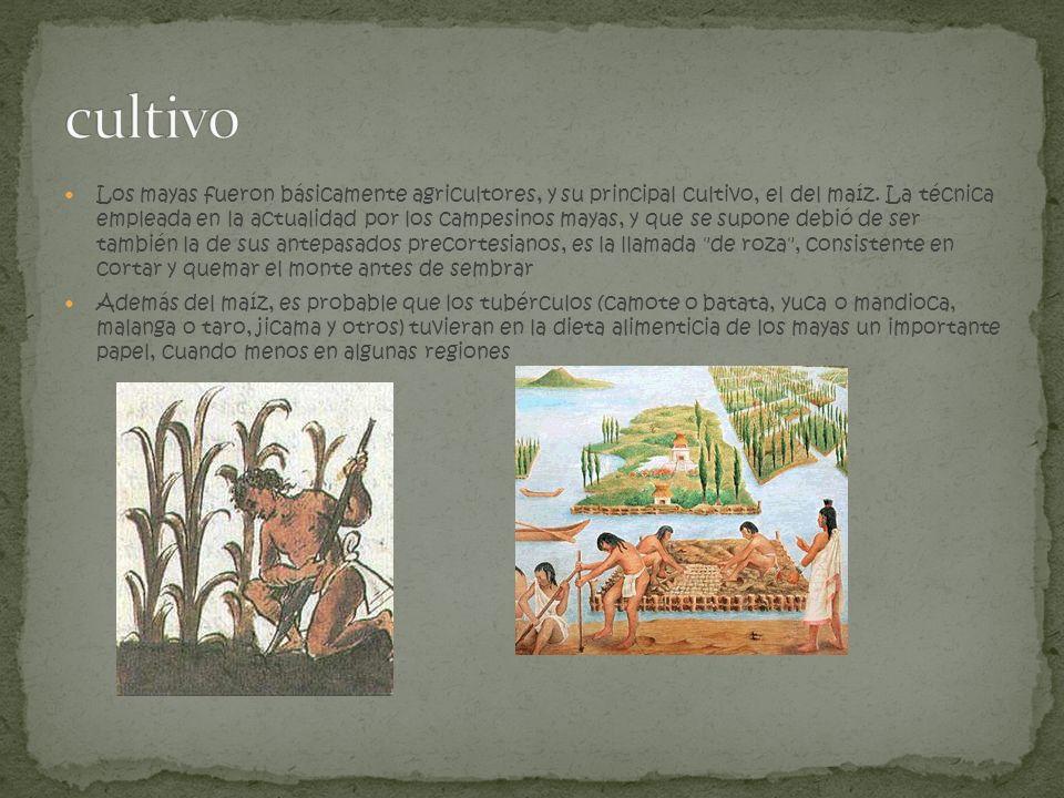 Los mayas fueron básicamente agricultores, y su principal cultivo, el del maíz. La técnica empleada en la actualidad por los campesinos mayas, y que s