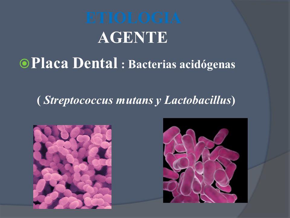 Placa Dental : Bacterias acidógenas ( Streptococcus mutans y Lactobacillus)