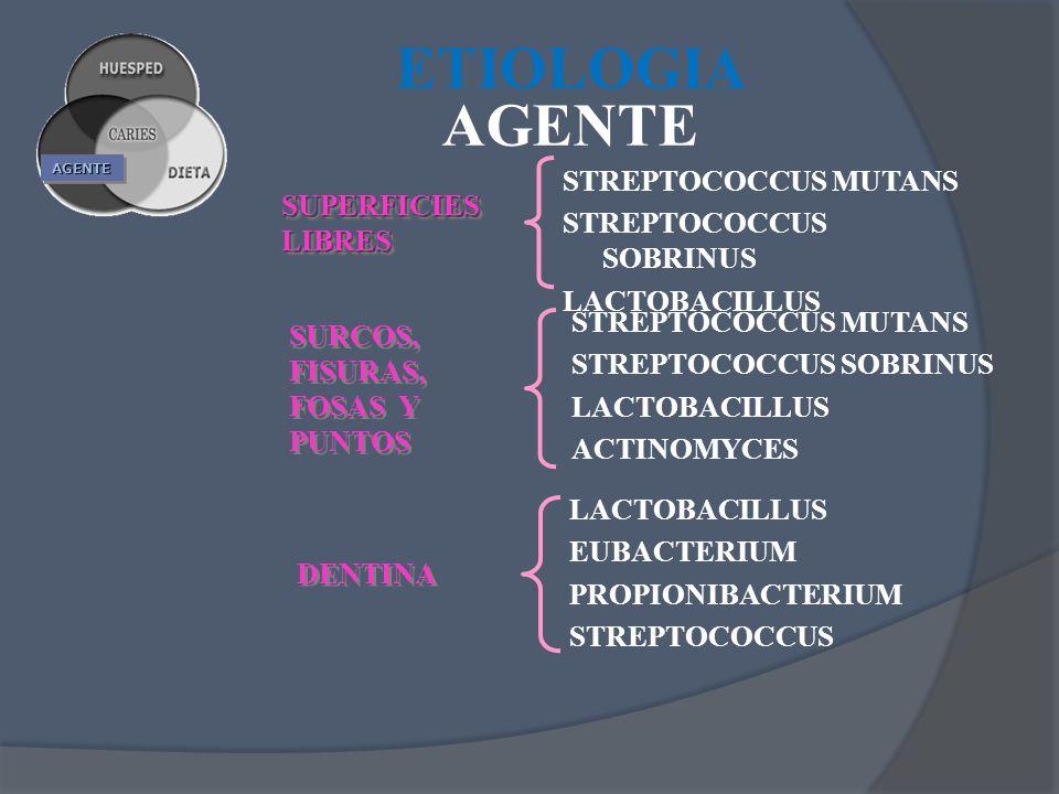 AGENTEAGENTE STREPTOCOCCUS MUTANS STREPTOCOCCUS SOBRINUS LACTOBACILLUS STREPTOCOCCUS MUTANS STREPTOCOCCUS SOBRINUS LACTOBACILLUS ACTINOMYCES LACTOBACI