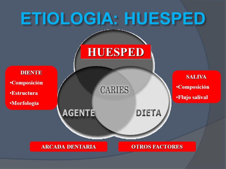 ETIOLOGIA: HUESPED HUESPEDHUESPED DIENTE Composición Estructura Morfología SALIVA Composición Flujo salival ARCADA DENTARIA OTROS FACTORES