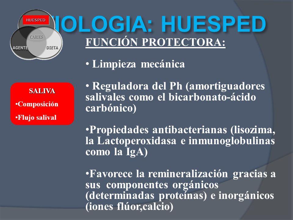 ETIOLOGIA: HUESPED HUESPEDHUESPED FUNCIÓN PROTECTORA: Limpieza mecánica Reguladora del Ph (amortiguadores salivales como el bicarbonato-ácido carbónic