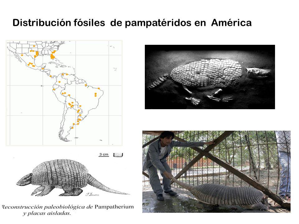 Distribución fósiles de pampatéridos en América