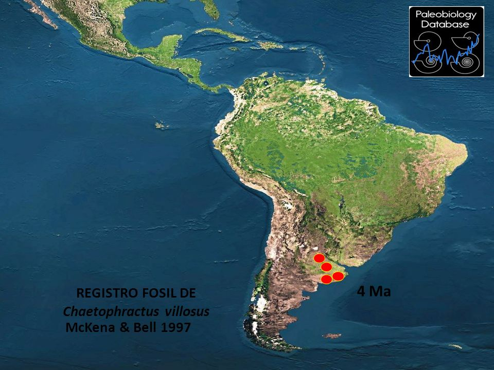 McKena & Bell 1997 REGISTRO FOSIL DE Chaetophractus villosus 4 Ma
