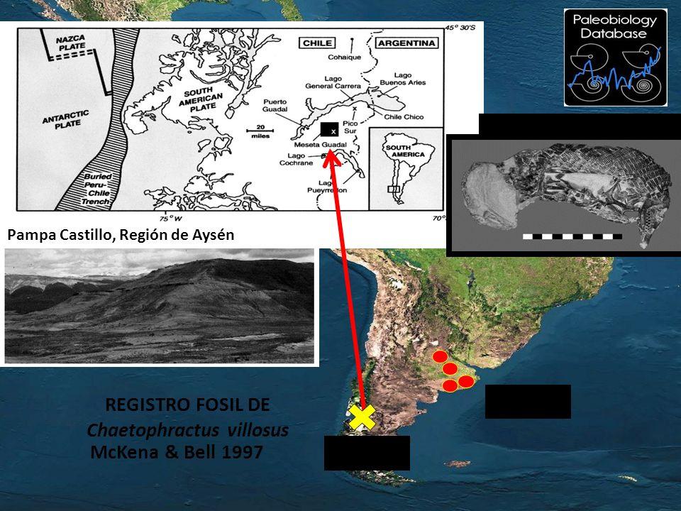 McKena & Bell 1997 REGISTRO FOSIL DE Chaetophractus villosus Fósil de Prozaedyus Pampa Castillo, Región de Aysén 4 Ma 15 Ma