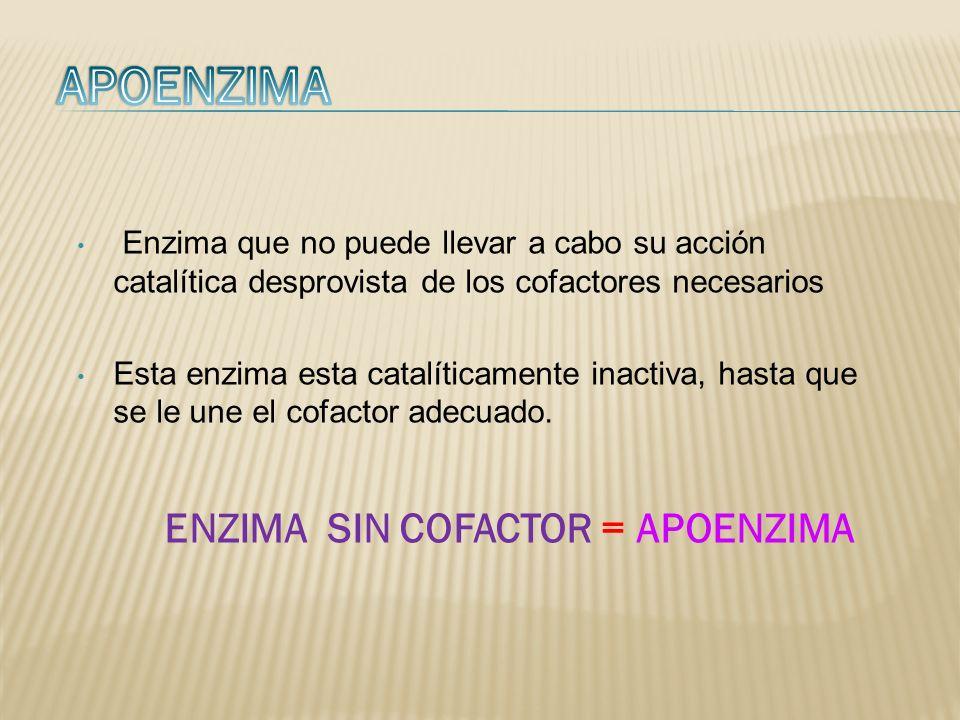 Enzima que no puede llevar a cabo su acción catalítica desprovista de los cofactores necesarios Esta enzima esta catalíticamente inactiva, hasta que s