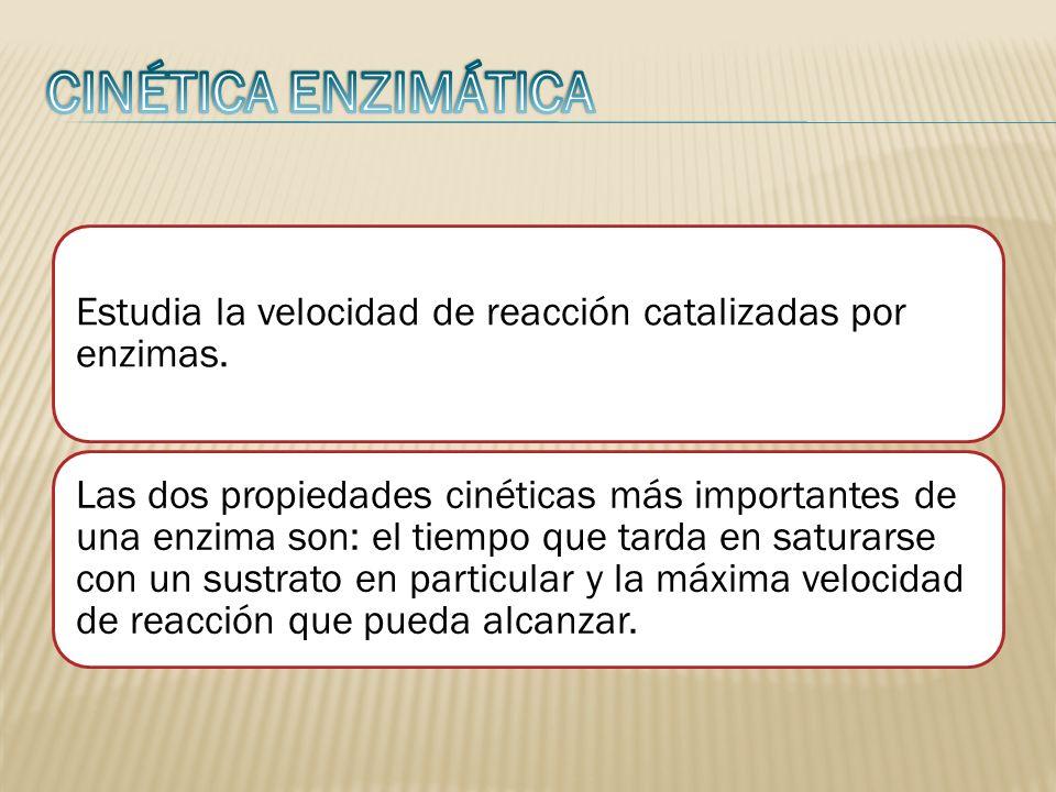 Estudia la velocidad de reacción catalizadas por enzimas. Las dos propiedades cinéticas más importantes de una enzima son: el tiempo que tarda en satu