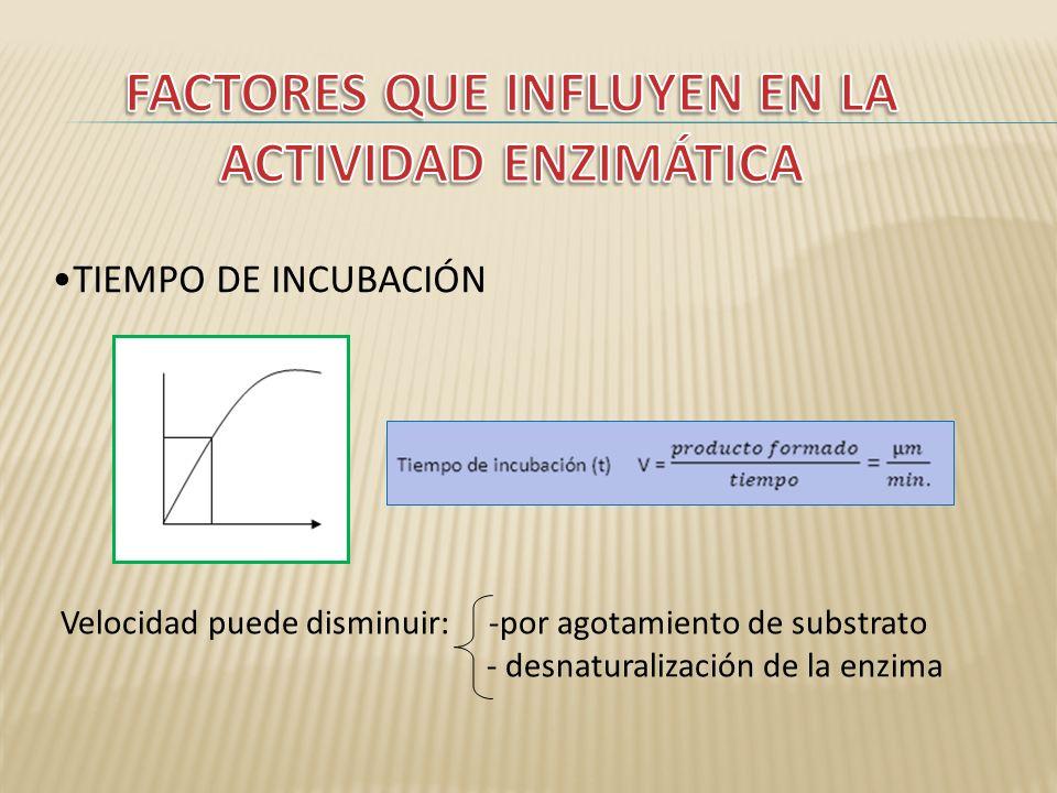 TIEMPO DE INCUBACIÓN Velocidad puede disminuir: -por agotamiento de substrato - desnaturalización de la enzima