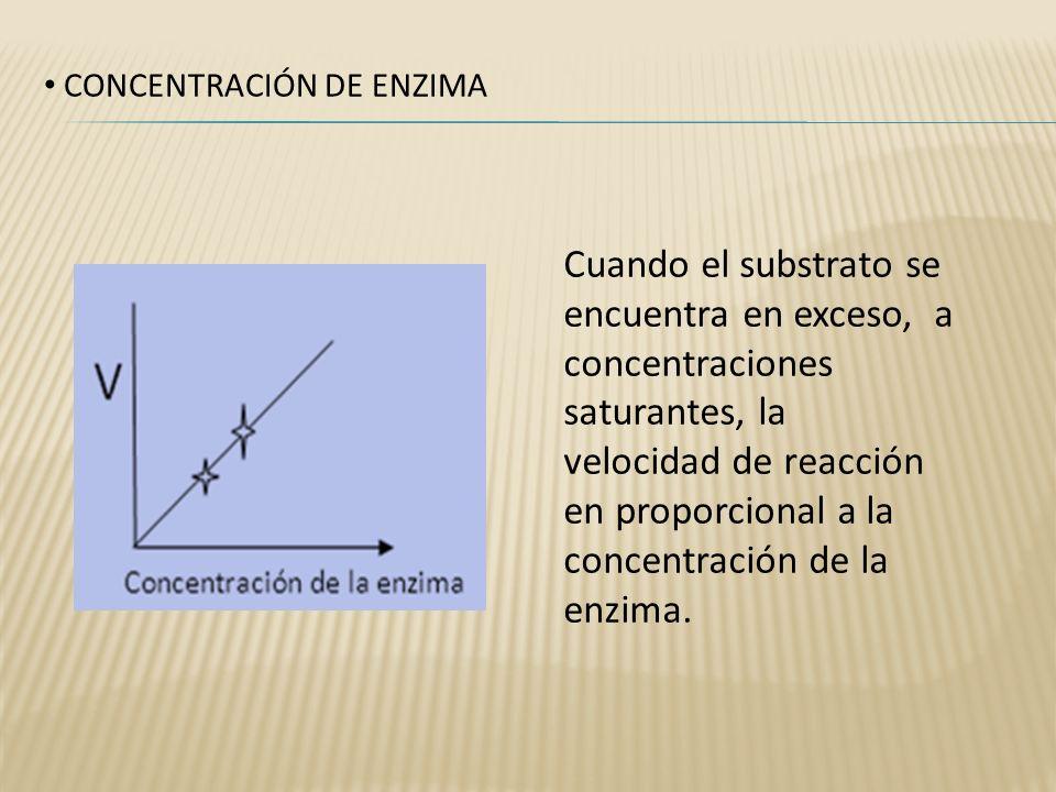 CONCENTRACIÓN DE ENZIMA Cuando el substrato se encuentra en exceso, a concentraciones saturantes, la velocidad de reacción en proporcional a la concen