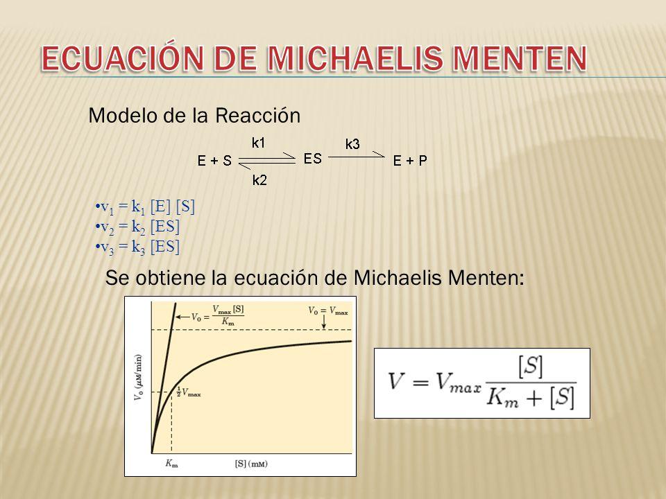 v 1 = k 1 [E] [S] v 2 = k 2 [ES] v 3 = k 3 [ES] Se obtiene la ecuación de Michaelis Menten: Modelo de la Reacción