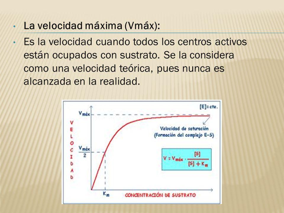 La velocidad máxima (Vmáx): Es la velocidad cuando todos los centros activos están ocupados con sustrato. Se la considera como una velocidad teórica,