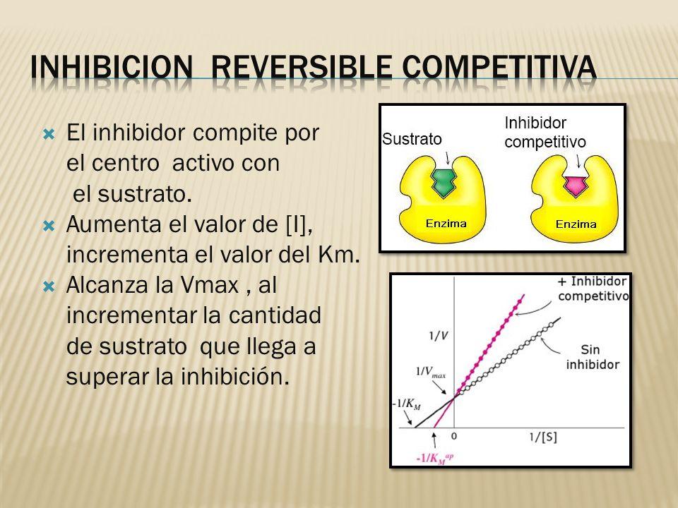 El inhibidor compite por el centro activo con el sustrato. Aumenta el valor de [I], incrementa el valor del Km. Alcanza la Vmax, al incrementar la can