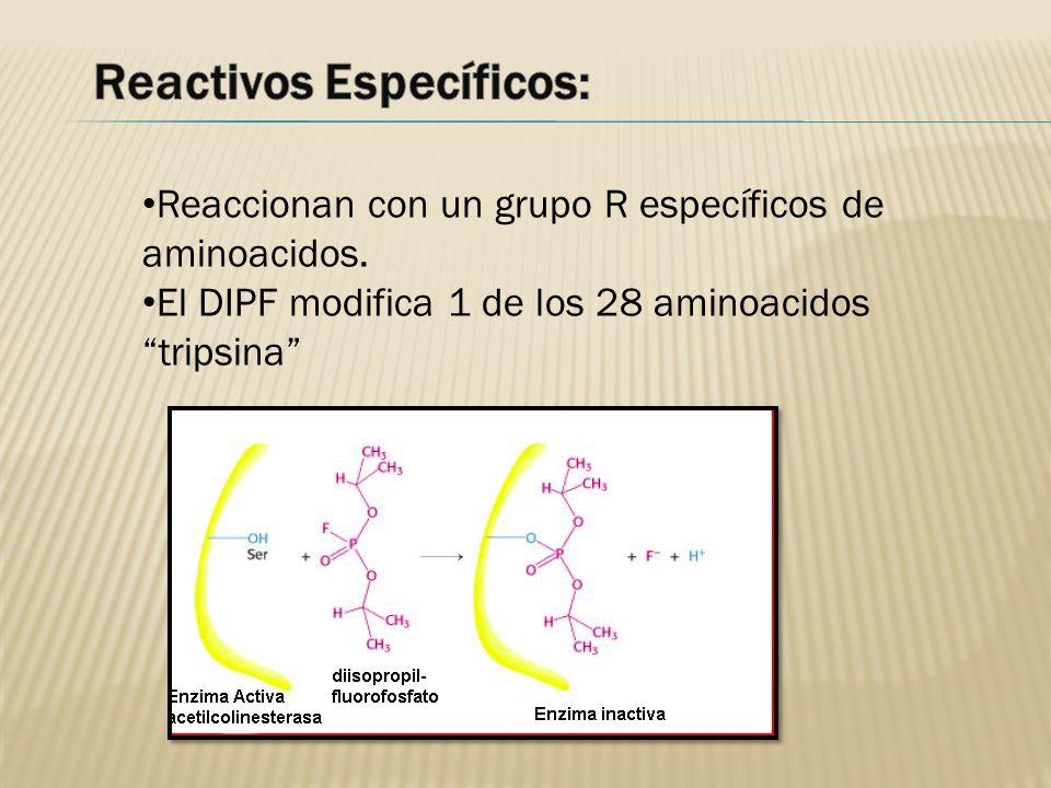 Reaccionan con un grupo R específicos de aminoacidos. El DIPF modifica 1 de los 28 aminoacidos tripsina