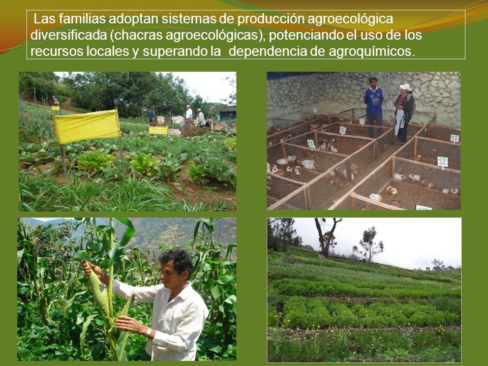 Las familias adoptan sistemas de producción agroecológica diversificada (chacras agroecológicas), potenciando el uso de los recursos locales y superan