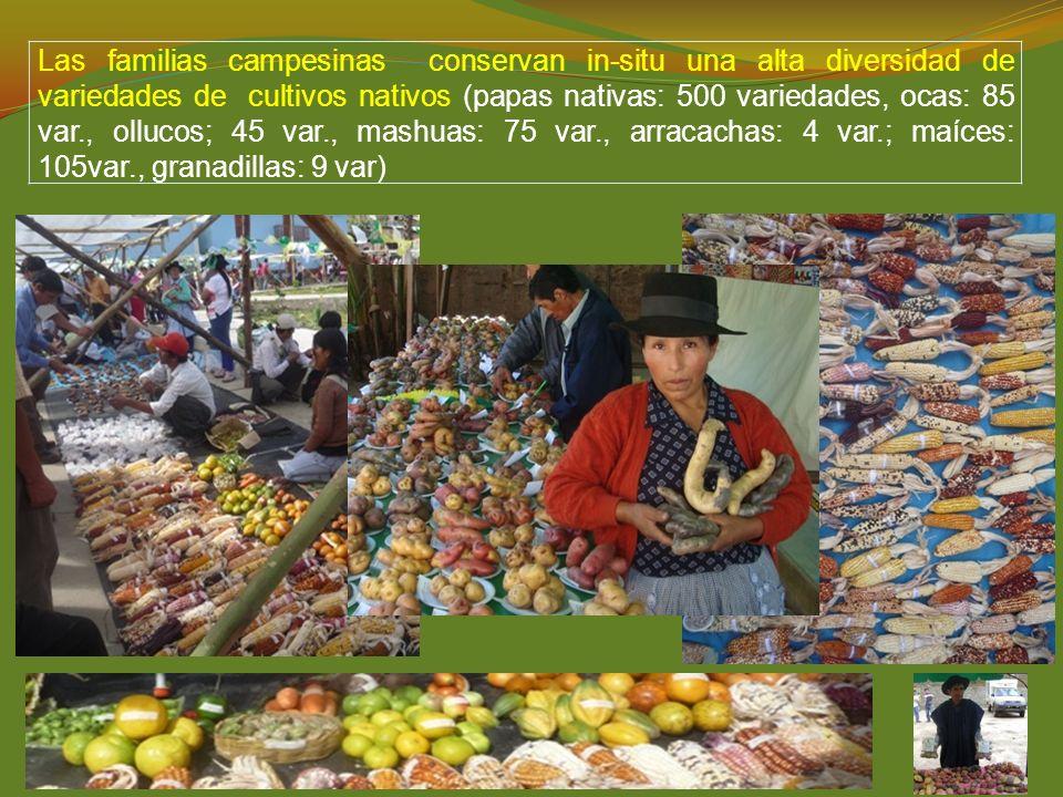 Las familias campesinas conservan in-situ una alta diversidad de variedades de cultivos nativos (papas nativas: 500 variedades, ocas: 85 var., ollucos