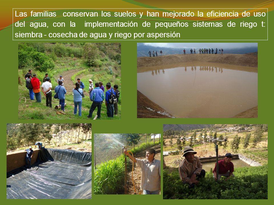 Las familias conservan los suelos y han mejorado la eficiencia de uso del agua, con la implementación de pequeños sistemas de riego t: siembra - cosec