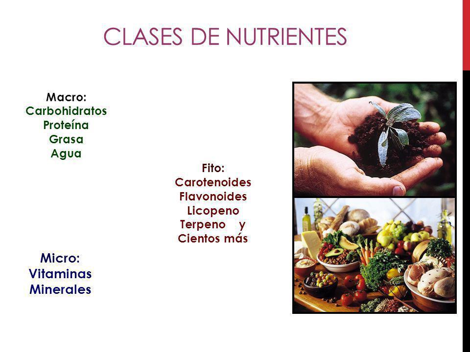 ¿Cree que está aportando a su organismo los nutrimentos necesarios que aportan las frutas y los vegetales.