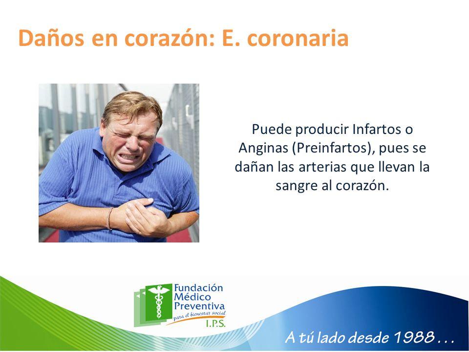 Daños en corazón: E. coronaria Puede producir Infartos o Anginas (Preinfartos), pues se dañan las arterias que llevan la sangre al corazón.