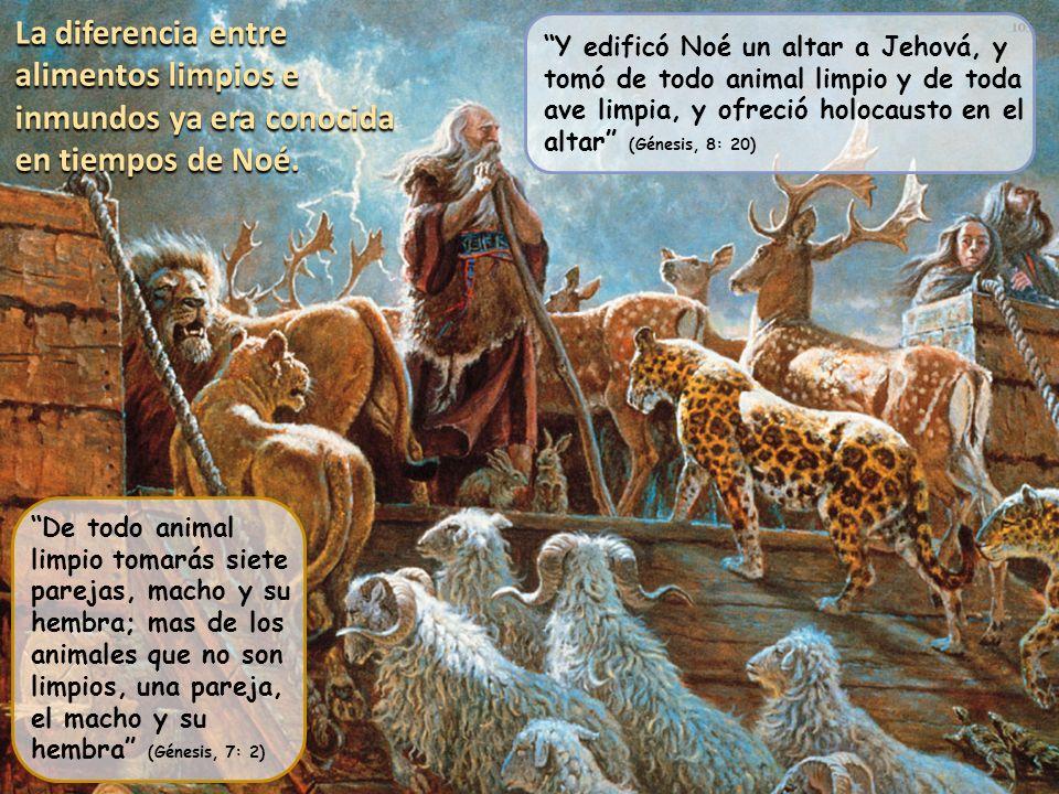 La diferencia entre alimentos limpios e inmundos ya era conocida en tiempos de Noé. Y edificó Noé un altar a Jehová, y tomó de todo animal limpio y de