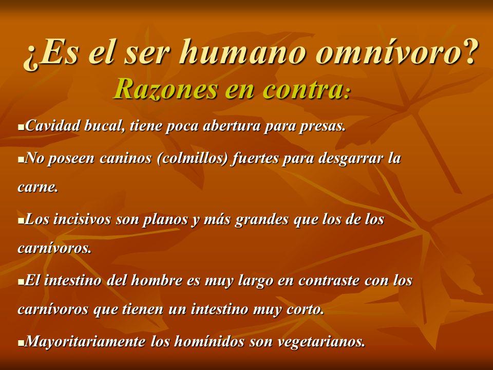 ¿ Por qué la nutrición vegetariana se mira por parte del personal sanitario español, en la mayor parte de las ocasiones, desde las posibles carencias.