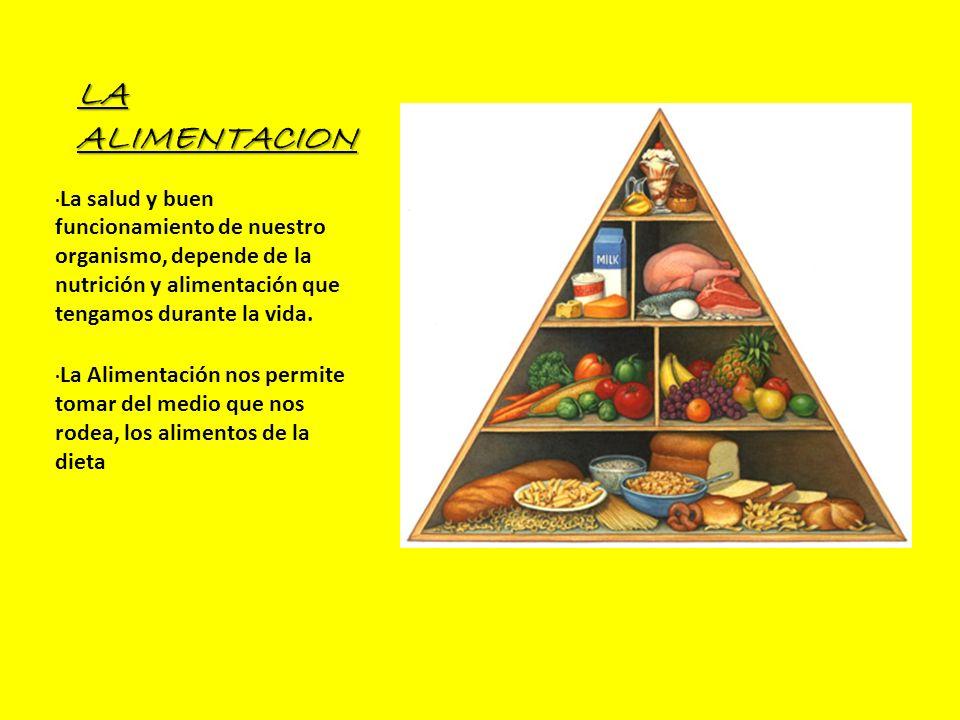 LA ALIMENTACION · La salud y buen funcionamiento de nuestro organismo, depende de la nutrición y alimentación que tengamos durante la vida. · La Alime