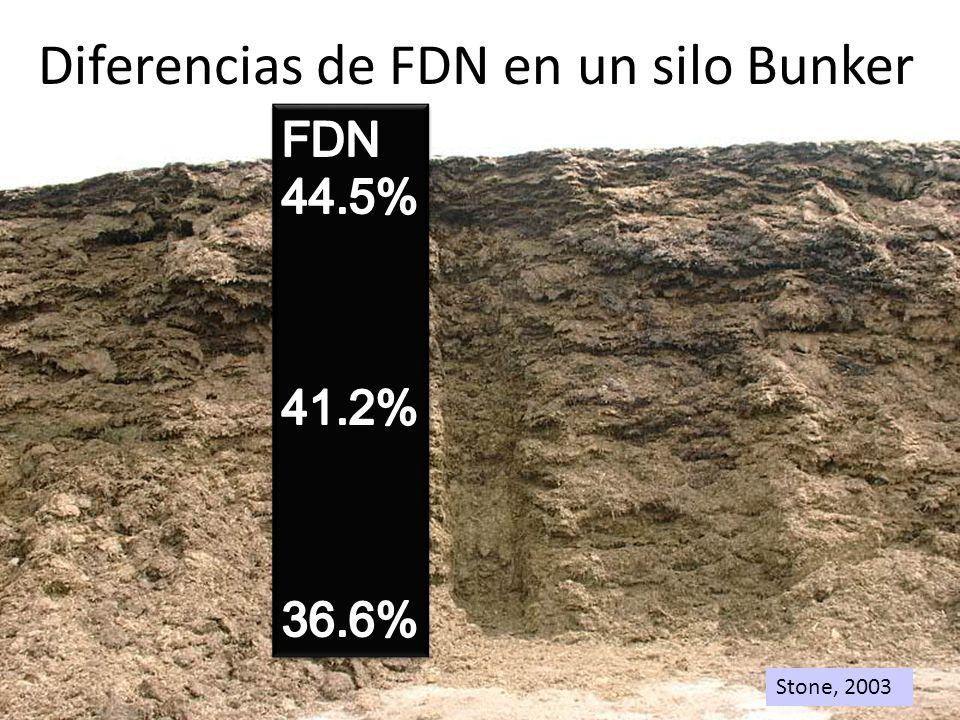 Stone, 2003 Diferencias de FDN en un silo Bunker