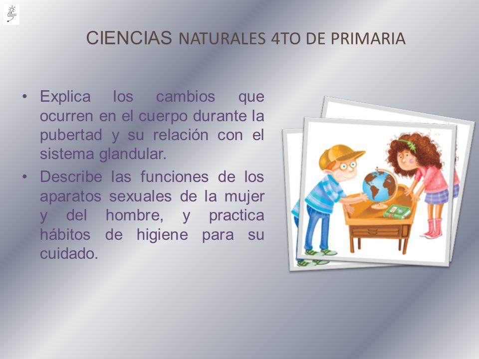 CIENCIAS NATURALES 4TO DE PRIMARIA Explica los cambios que ocurren en el cuerpo durante la pubertad y su relación con el sistema glandular. Describe l