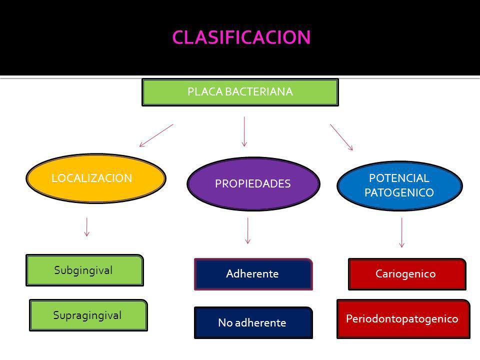 PLACA BACTERIANA LOCALIZACION PROPIEDADES POTENCIAL PATOGENICO Subgingival Supragingival Adherente No adherente Cariogenico Periodontopatogenico
