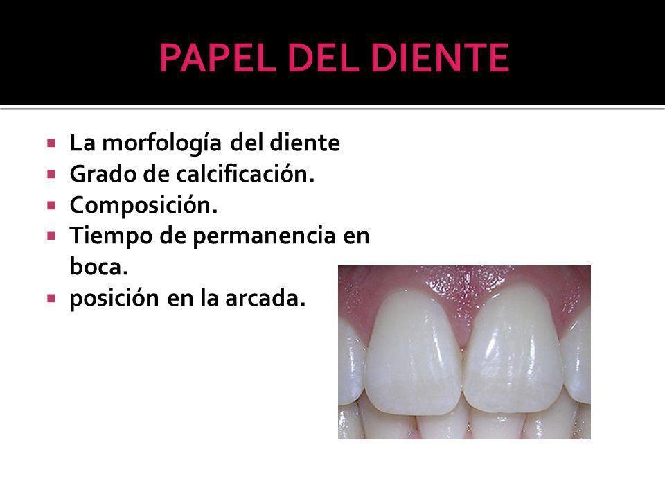 La morfología del diente Grado de calcificación.Composición.