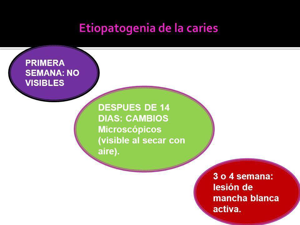 PRIMERA SEMANA: NO VISIBLES DESPUES DE 14 DIAS: CAMBIOS Microscópicos (visible al secar con aire).