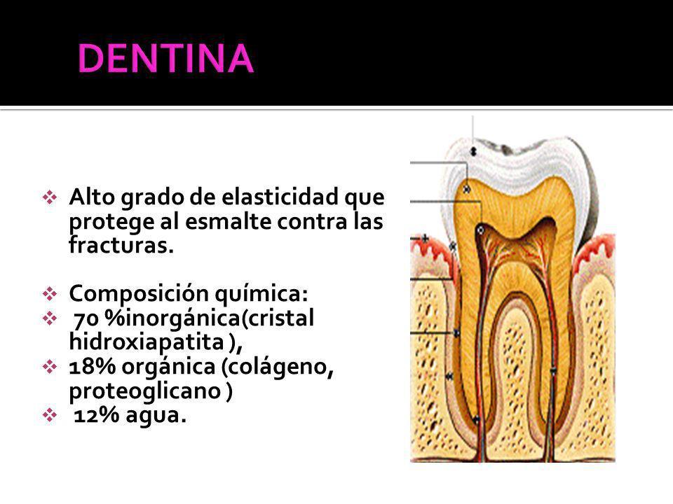 Alto grado de elasticidad que protege al esmalte contra las fracturas.