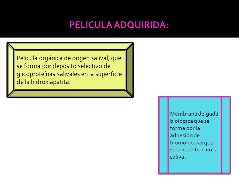 Película orgánica de origen salival, que se forma por depósito selectivo de glicoproteínas salivales en la superficie de la hidroxiapatita.