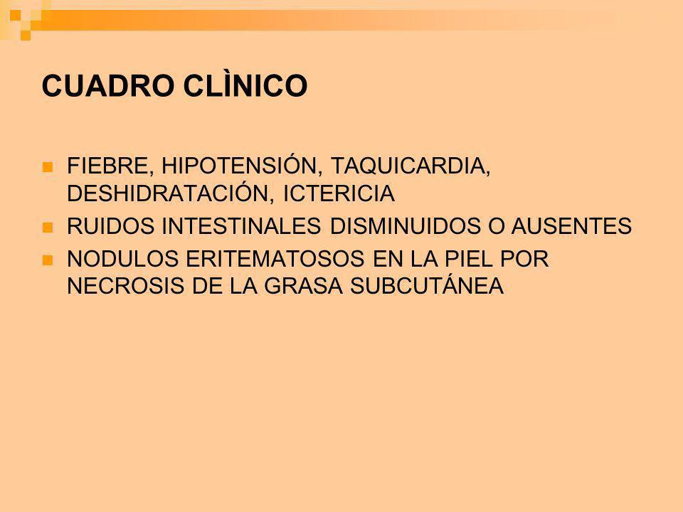 CUADRO CLÌNICO FIEBRE, HIPOTENSIÓN, TAQUICARDIA, DESHIDRATACIÓN, ICTERICIA RUIDOS INTESTINALES DISMINUIDOS O AUSENTES NODULOS ERITEMATOSOS EN LA PIEL