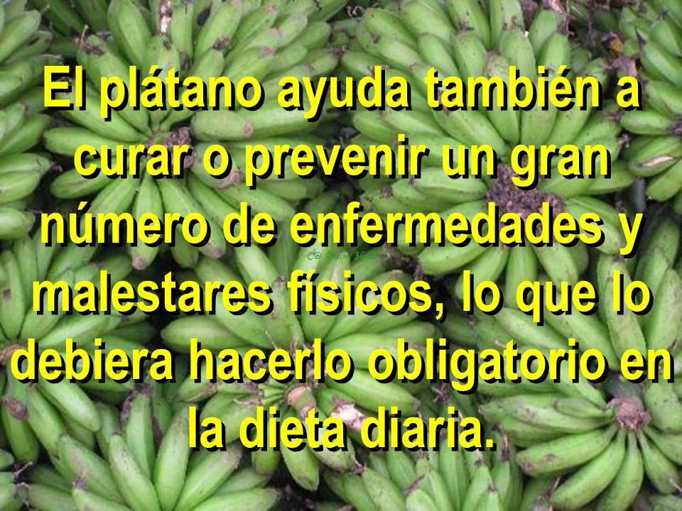 El plátano ayuda también a curar o prevenir un gran número de enfermedades y malestares físicos, lo que lo debiera hacerlo obligatorio en la dieta dia
